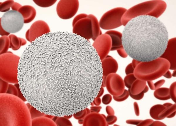 Người bệnh thường xuyên xuất hiện các vết bầm tím, khó cầm máu